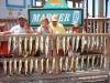 7-09-fishing-pics-july-002