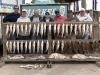 welu-fishing-trip-mar-13-2011