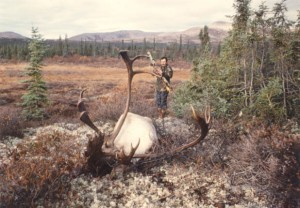 Pope and Young Barren Ground Caribou, Alaska 370 2/8""